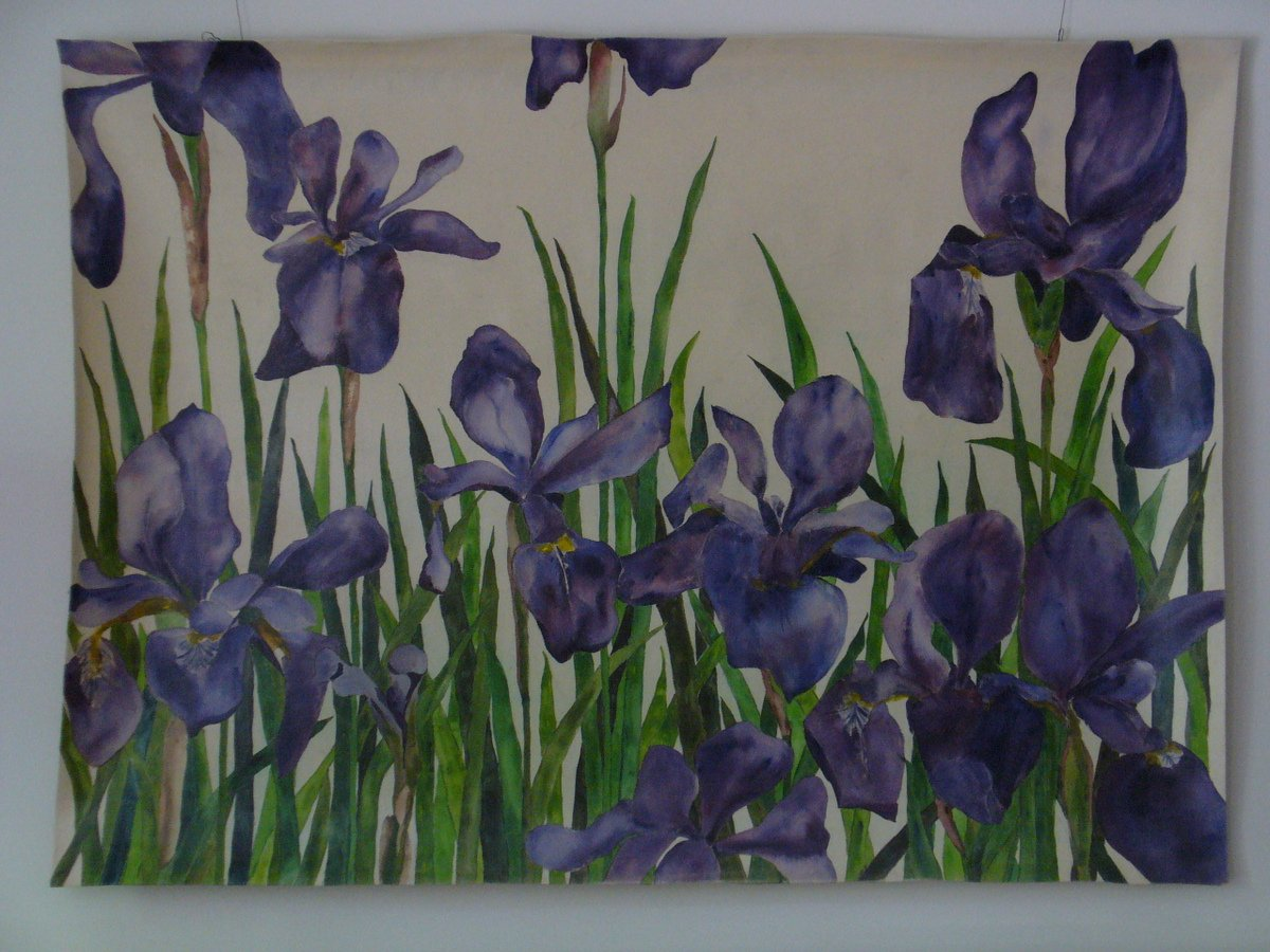 "Blue Flag Iris acrylic on canvas70 x 60""/178x152cm gift to Dora Micelli 2014"