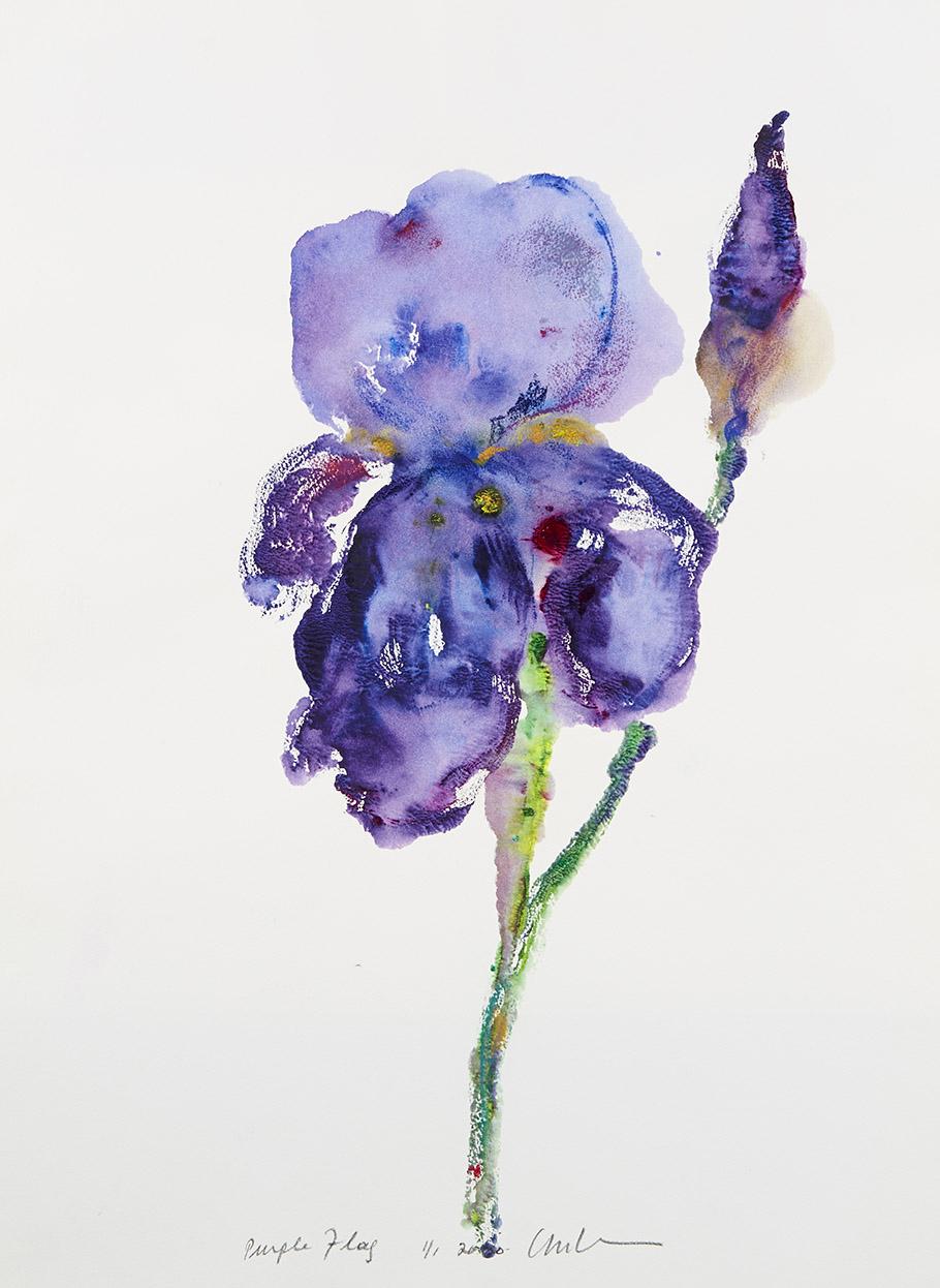 Purple-Flag-0115